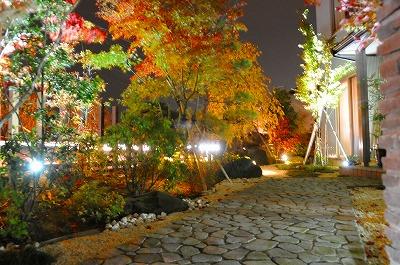 ライトアップが映えるコハウチワカエデの庭
