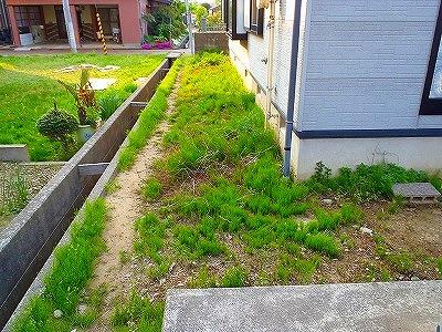 家回りの雑草対策